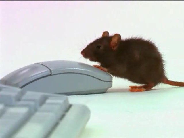mouse_computer.jpg