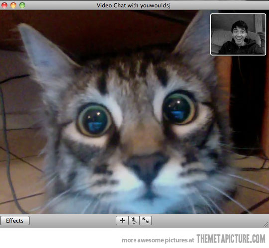 funny-cat-webcam-face